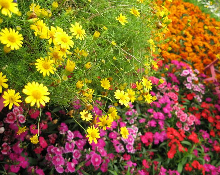 Best favorite flowers in the world best flowers for your garden