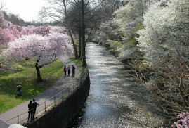 # Flickr Blossom