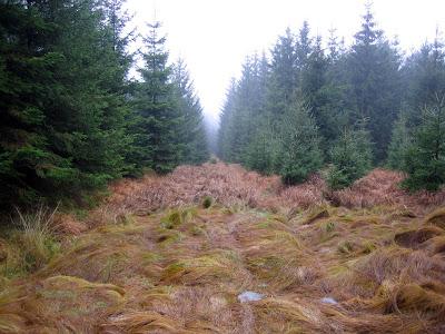Lesní průsek