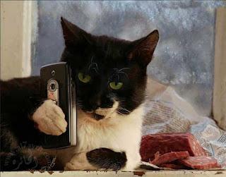 Фото котов с телефоном
