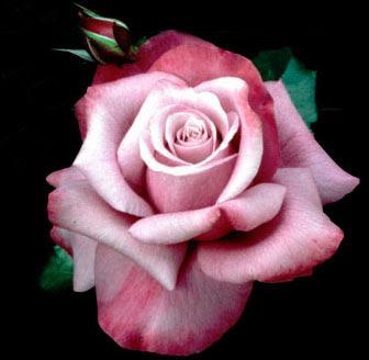 flower delyvery