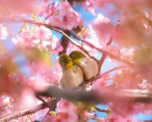 Hope this spring will symbolize new beginnings, hope and inspiration