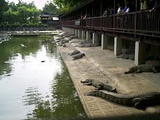 BANGKOK -THAILAND DECEMBER 2008