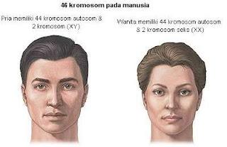 Jumlah kromosom pada pria & wanita