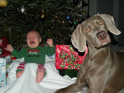 http://2.bp.blogspot.com/_SC_ZTuIvauw/TRQp8a5mvgI/AAAAAAAAAQk/-_Vbj8j3_0Y/s1600/Christmas%2B2010%2B040.JPG