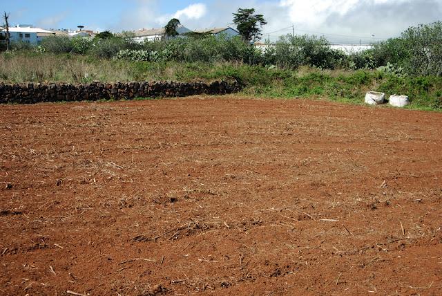 Isla de pan falsa siembra - Preparacion de la tierra para sembrar ...