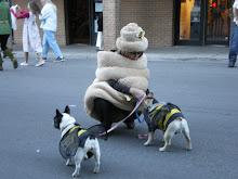 Park City Dog Parade