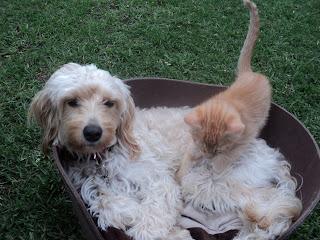 ORGANIZA A TU MASCOTA: generalidades de perros y gatos
