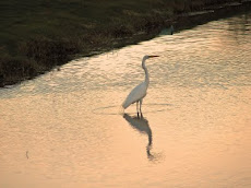 Egret at ironwood