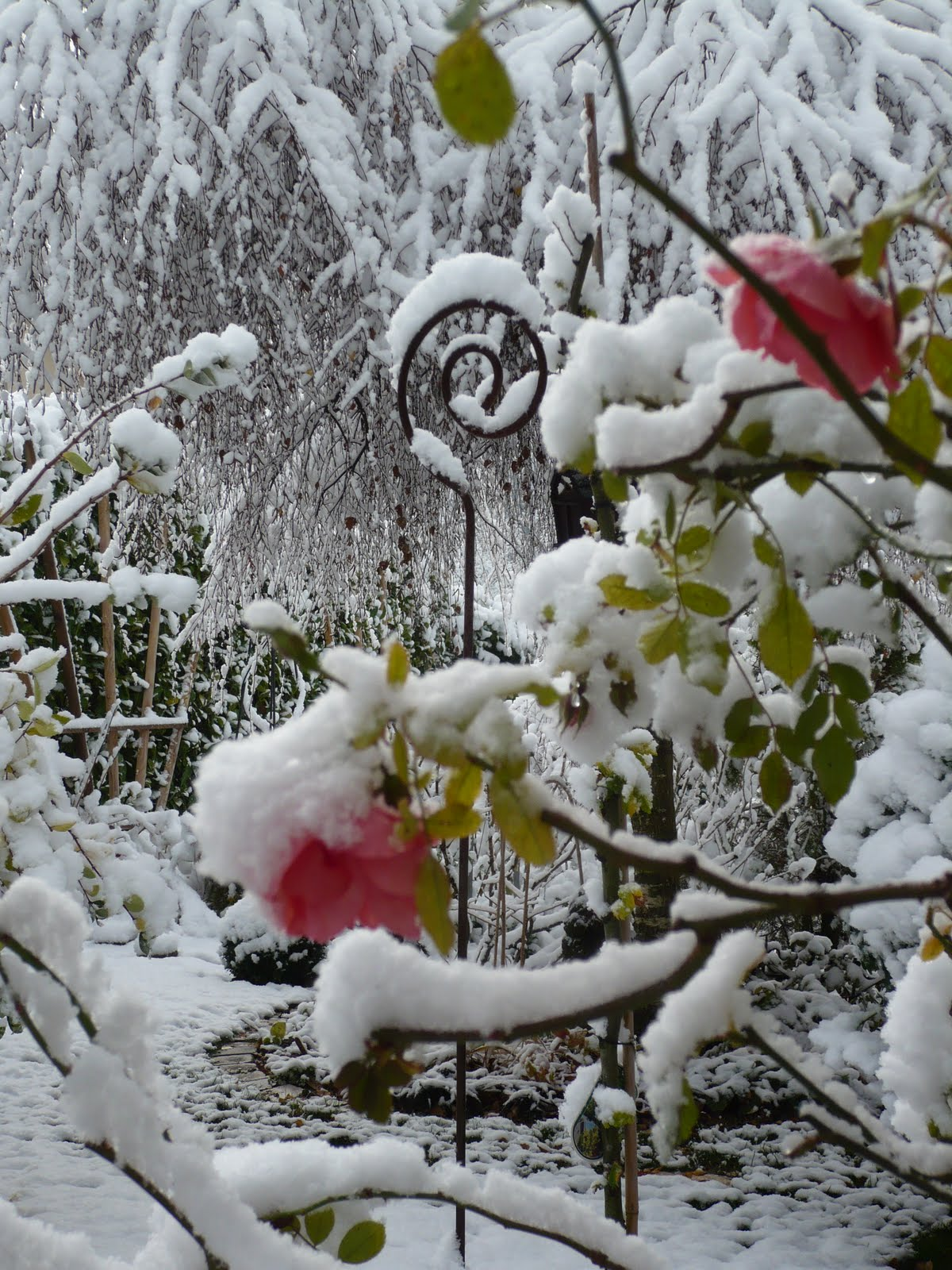 Le jardin des grandes vignes neige au jardin - Le jardin des grandes vignes ...