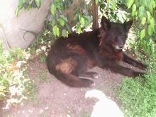 Mi perra Dolly ... ♥