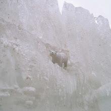 Tip of the Icebear - Jääkarhun huippu