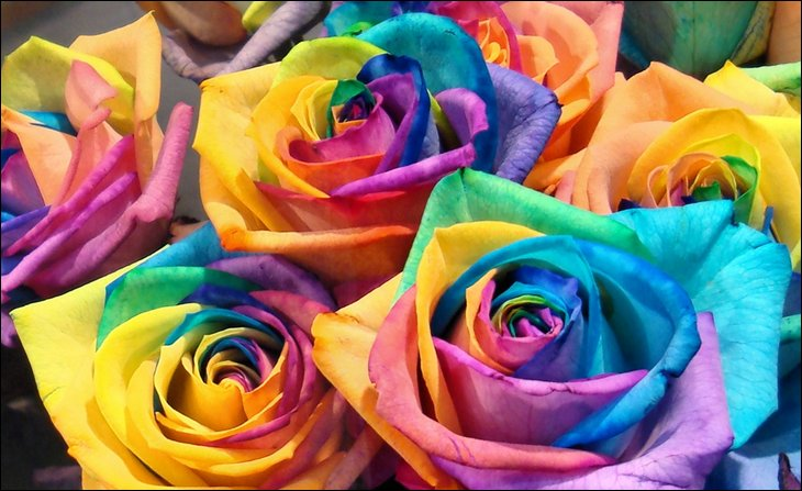 Rainbow roses all colors in one rose alpin funny picture for How to color roses rainbow