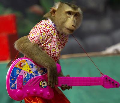 Monkey show in bangkok