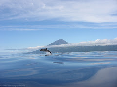 A Dolphin with Pico island behind!! Just beautiful...