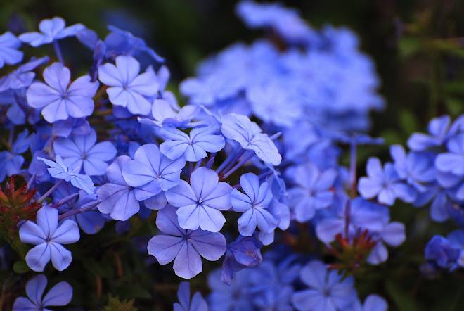Azul, el color más bonito, sin duda