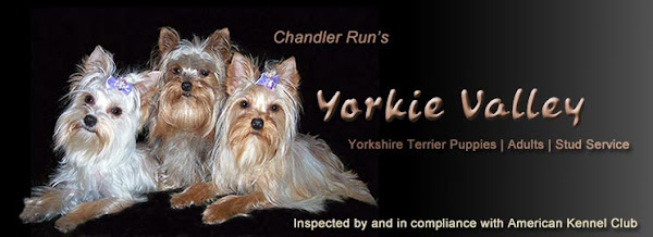 Chandler Run's Yorkie Valley