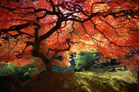 Lindas Imagens da Natureza - 9
