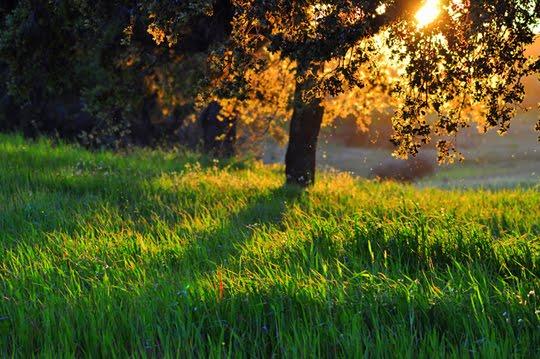 Lindas Imagens da Natureza - 4