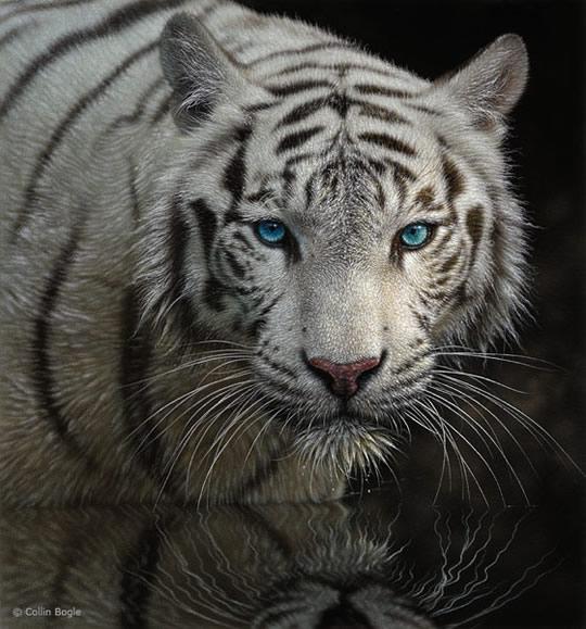 Impressionantes Pinturas de Animais Selvagens - 08