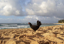 Rooster on the Beach