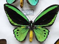 Schmetterlinge Falter2