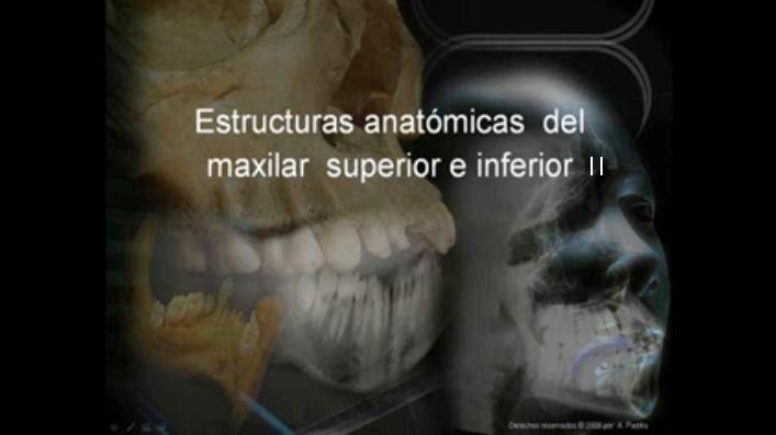 El blog de radio: Estructuras Anatomicas de los Maxilares \