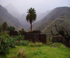 PARQUE NATURAL DE TAMADABA RESERVA DE LA BIOSFERA DE GRAN CANARIA . EL RISCO DE AGAETE .