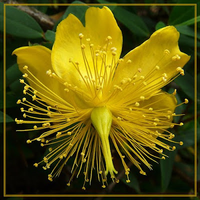 45 imagenes hermosas flores exoticas dise o gr fico web - Flores tropicales fotos ...