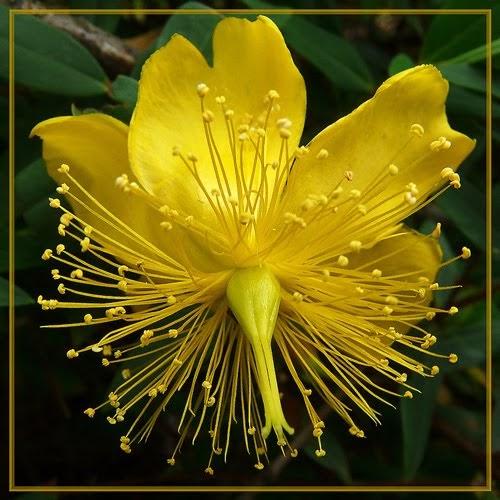 45 imagenes hermosas flores exoticas