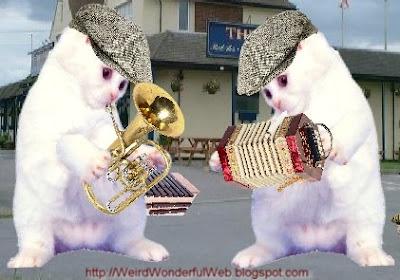 Musical-Kittens