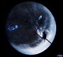 Miagolando alla Luna