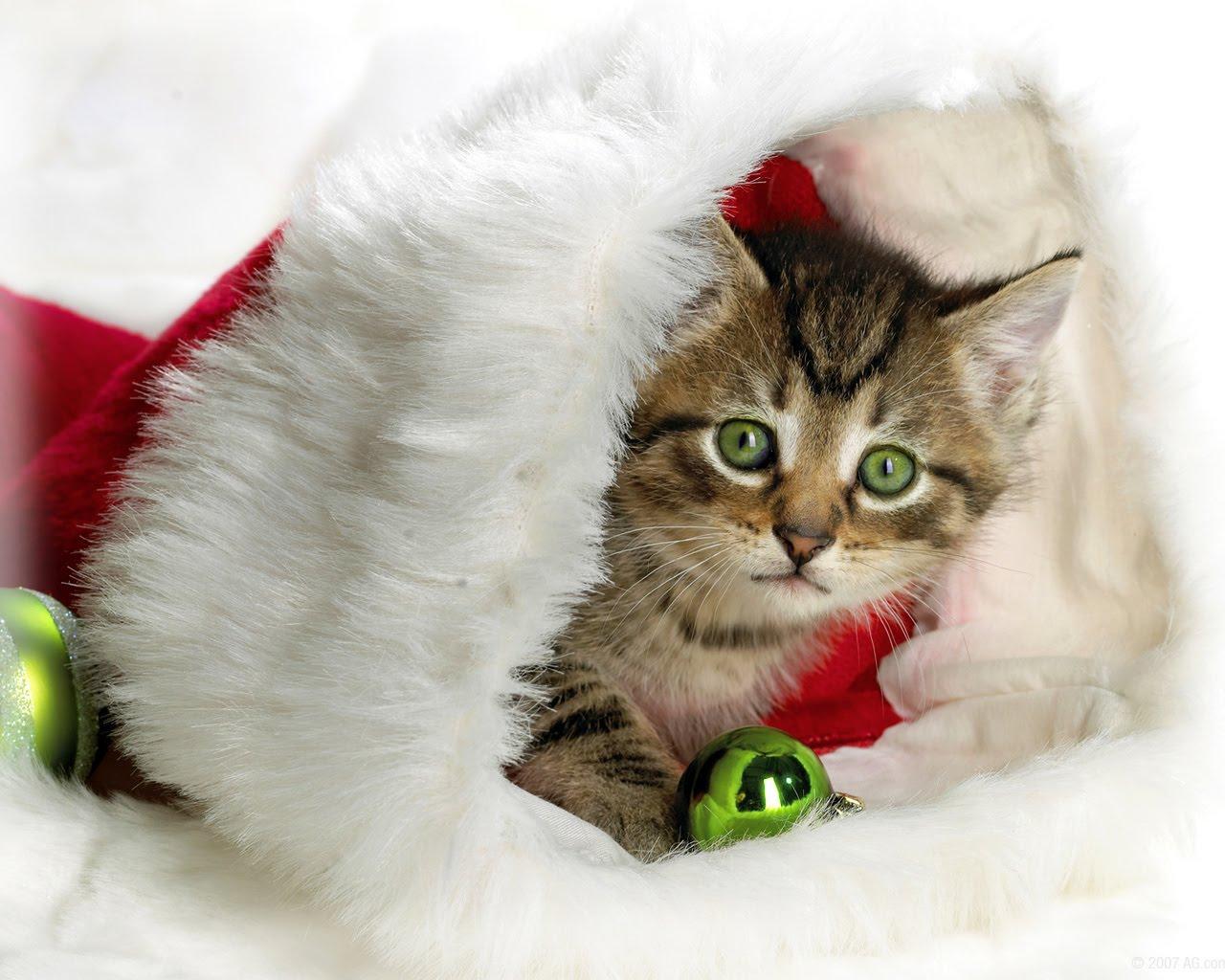http://2.bp.blogspot.com/_SWYwL3fIkFs/S71VSdIBqxI/AAAAAAAAEFE/wMsHbOXSpBQ/s1600/cat+christmas+hat.jpg