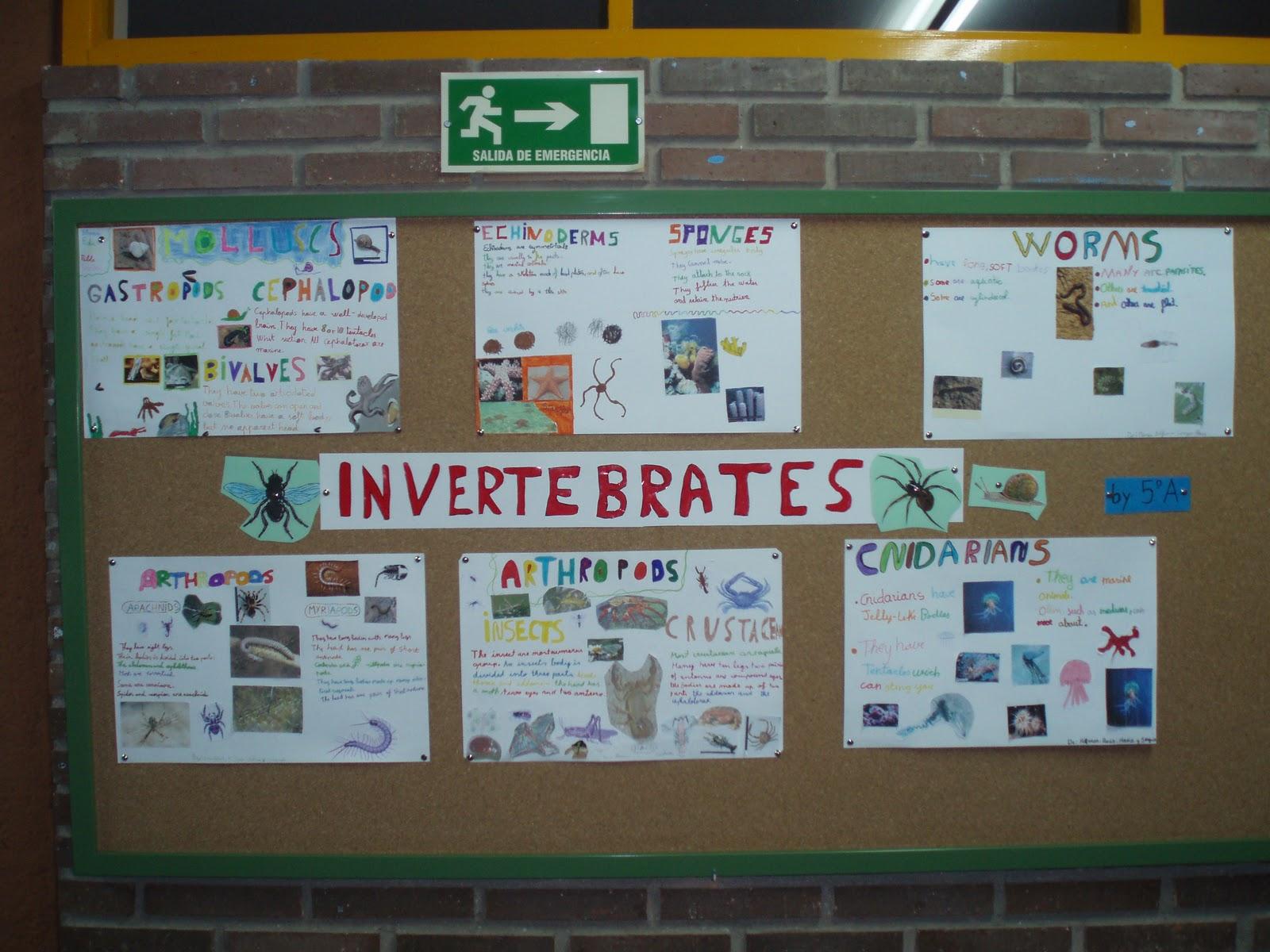 Bilingual Education Activities: VERTEBRATES AND INVERTEBRATES