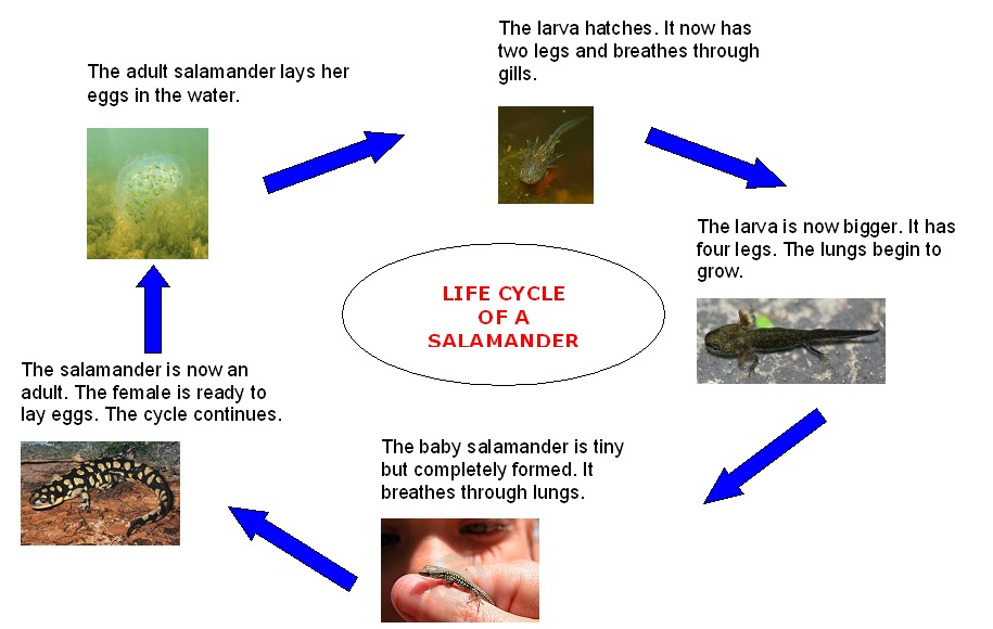 Bilingual Education Activities  LIFE CYCLES COMPETITION
