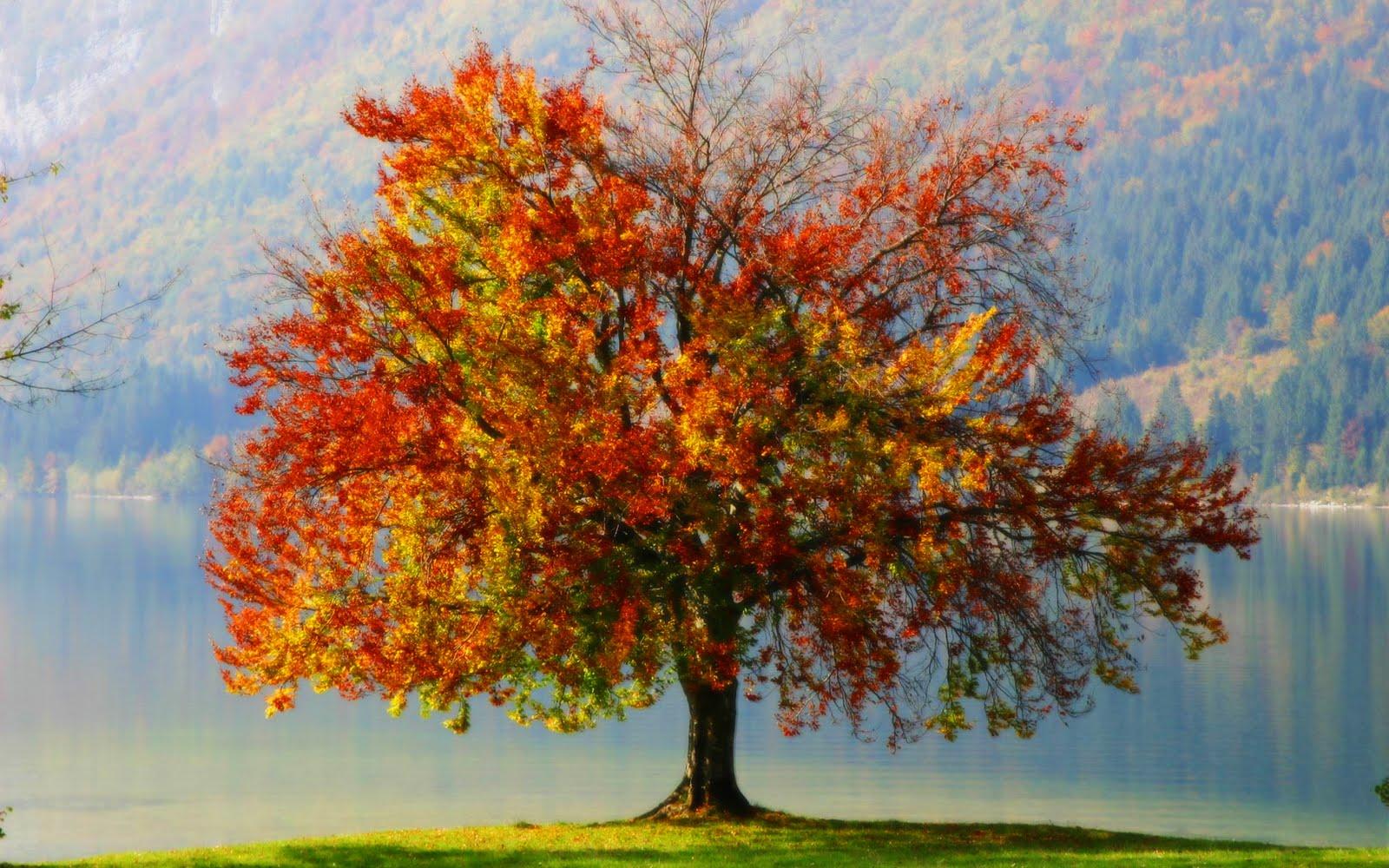 http://2.bp.blogspot.com/_SYCSU5V7huM/TDjHd1WcMFI/AAAAAAAABMM/pB3hCr1j4V4/s1600/autumn_tree_1920.jpg