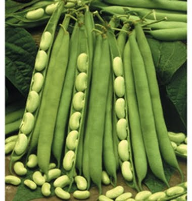 There are many families or types of dry or shell beans