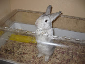 My Associate...Jack the Rabbit