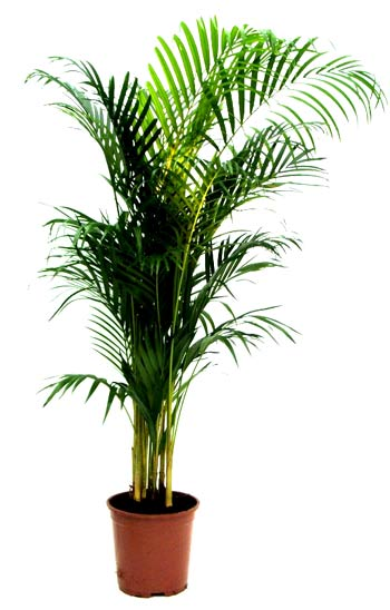 [palmier.jpg]