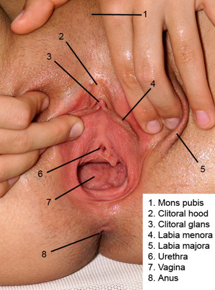 Where vaginas are located