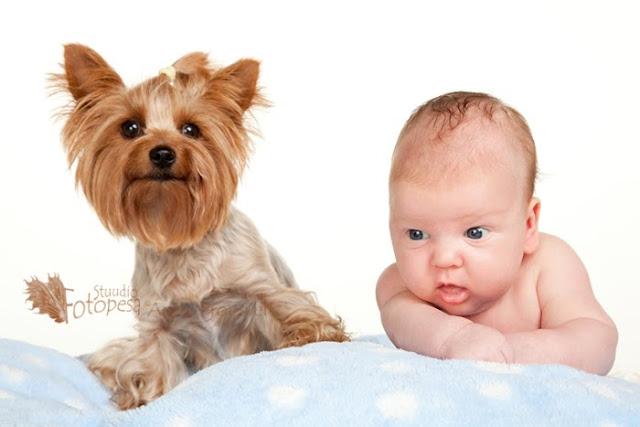 beebi ja koer fotostuudios
