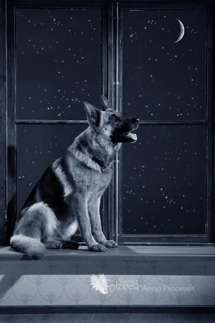 koer ja kuu