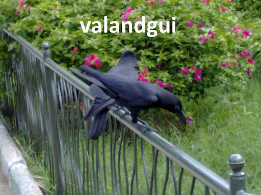 valandgui