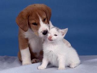la verdad acerca de perros y gatos: