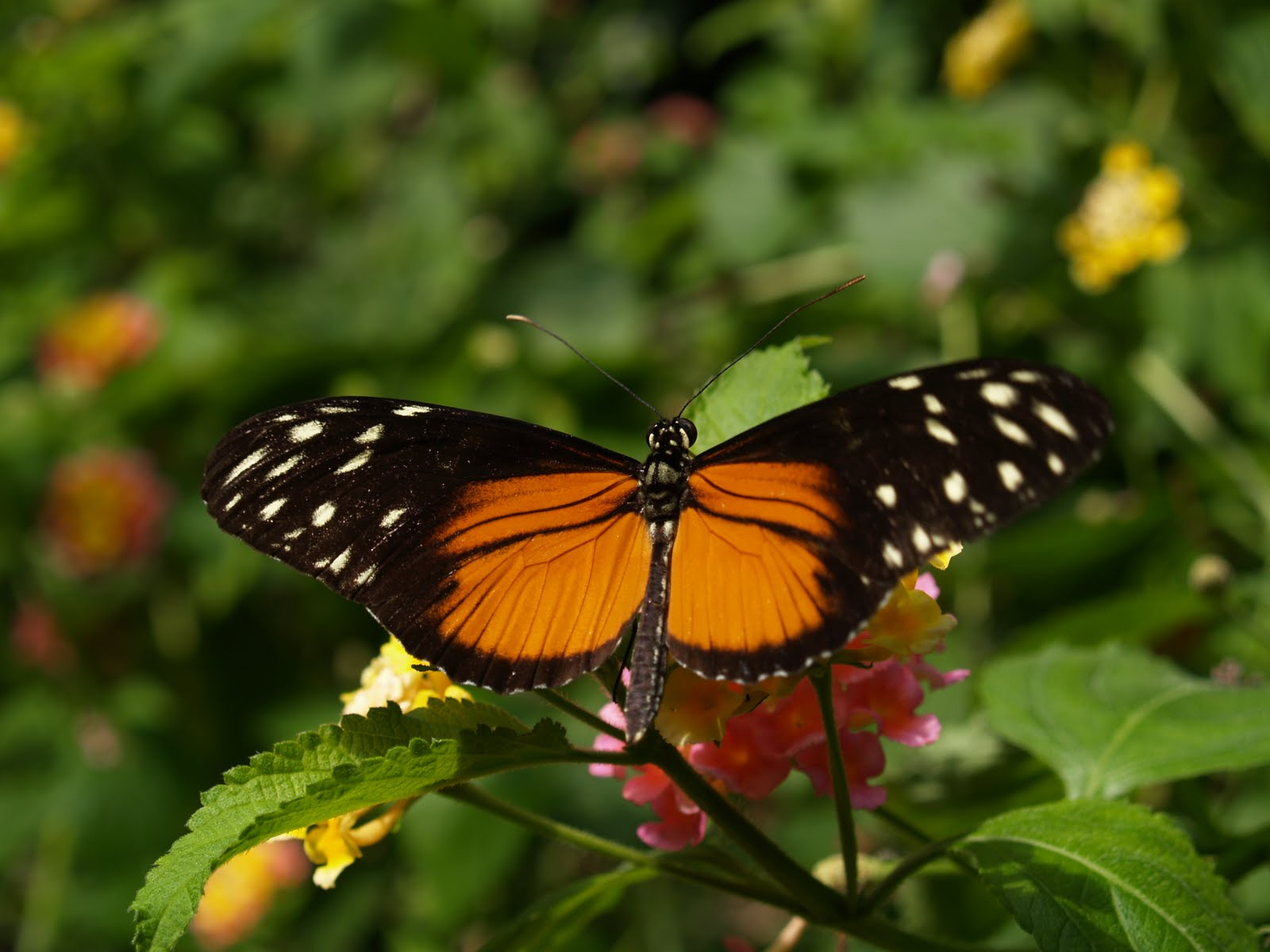 Dogsblog Victoria Butterfly Garden