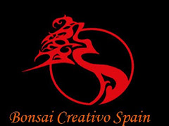 Bonsai Creativo.IT