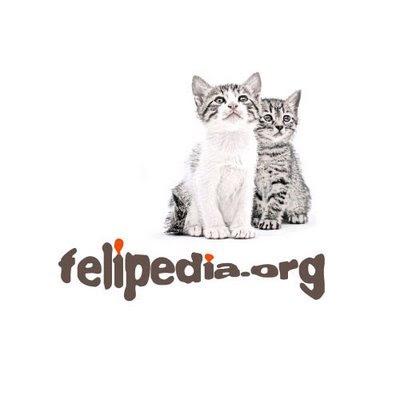 Felipedia.org (La Wikipedia de lso gatos) Felipedia