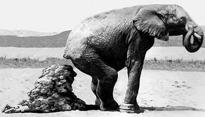 Del AFrica Don Elefante anotado