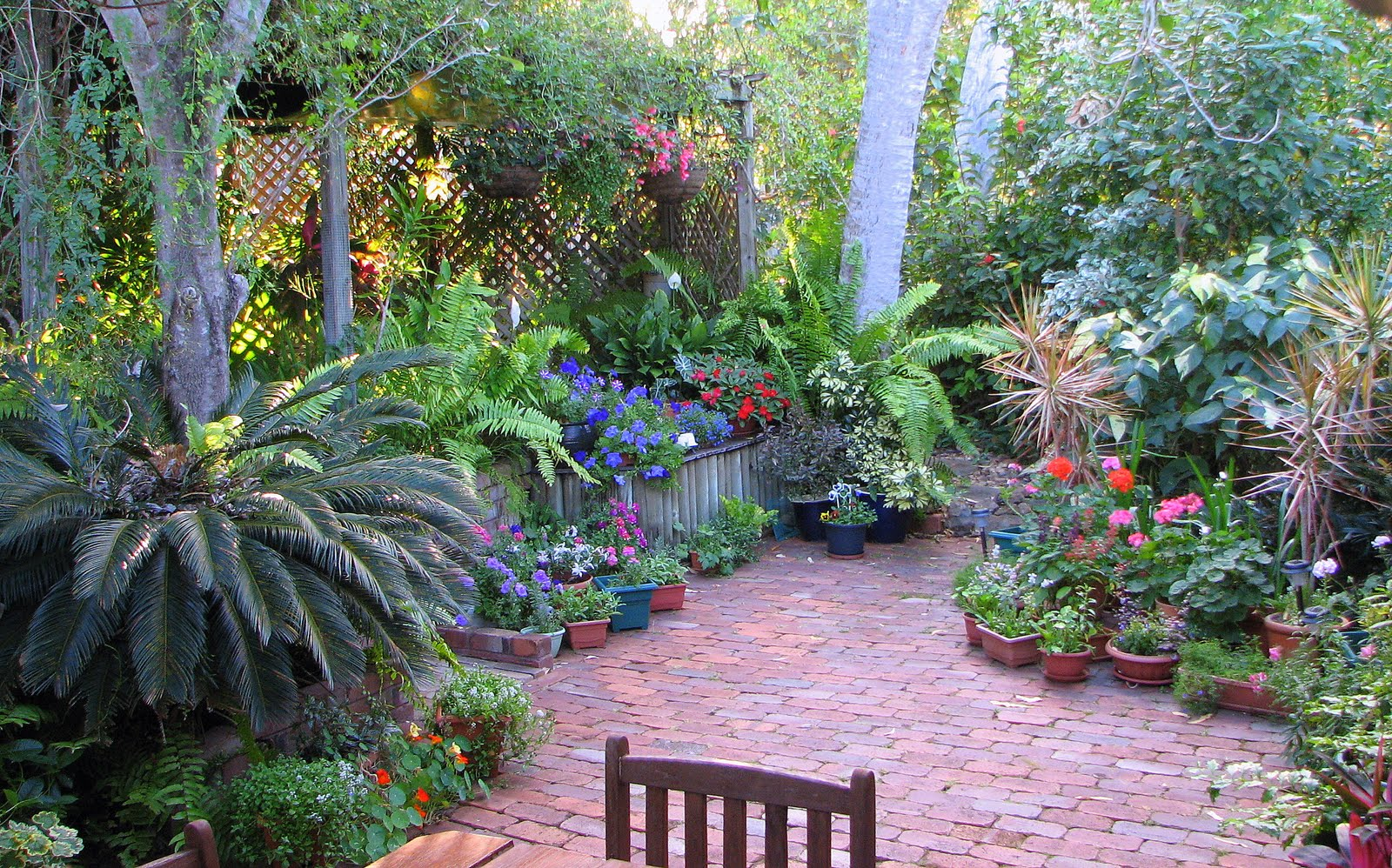 My dry tropics garden all about my place for Gardening australia