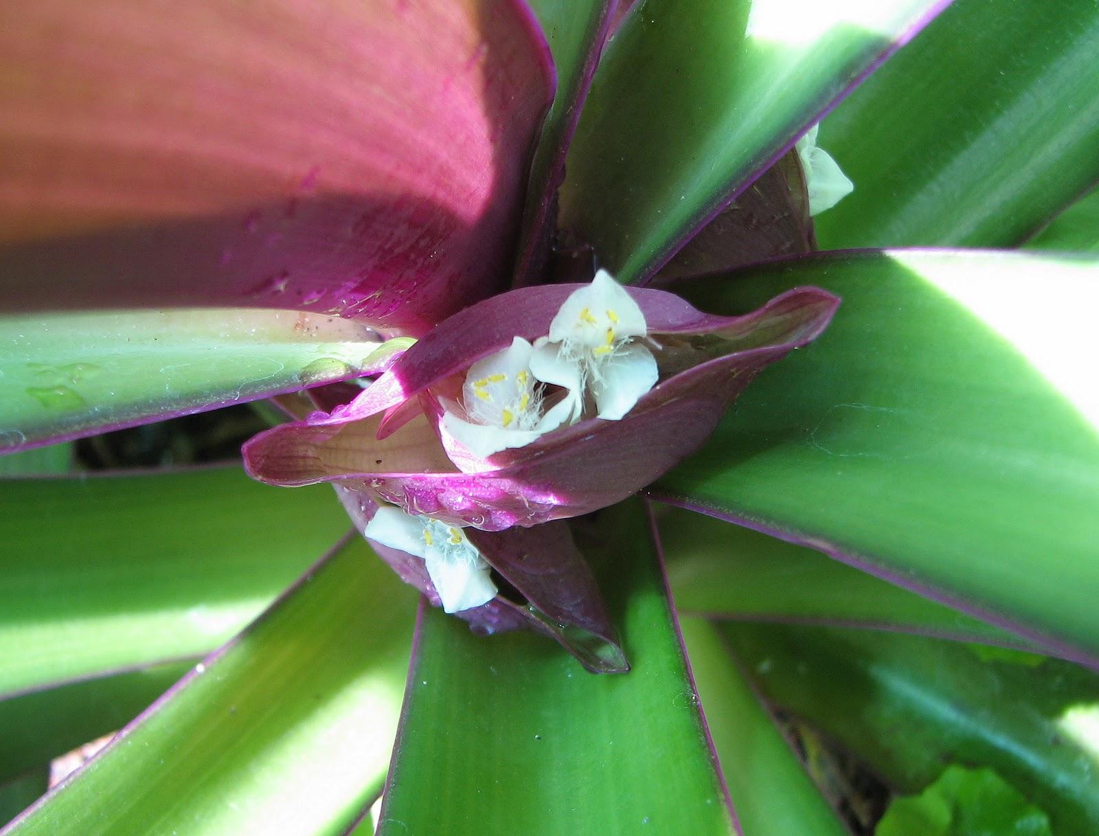 Растение с красными цветами и плодами фото и названия